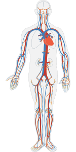 human-body-311864_1280