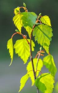 leaf-3341386_1920