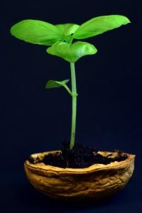 plant-3117533_1920